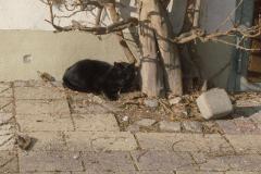 Kater Blacky schlummert in der Sonne