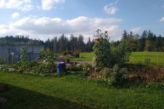Kartoffelgarten mit Sonnenblumen neben der Kläranlage