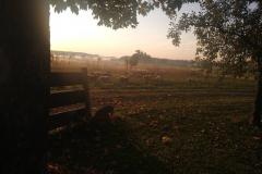 Schafe im Sonnenaufgang
