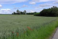 Blick von der Stoffener Straße zum Hof, über ein Getreidefeld mit roten Mohnblumen