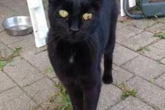 Katze Schwarze Prinzessin